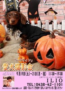 9月19日~21日ILIO三井アウトレットパーク木更津店様web用.jpg